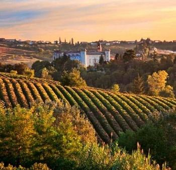 Wine tasting in Piedmont-Italy - 10 hours